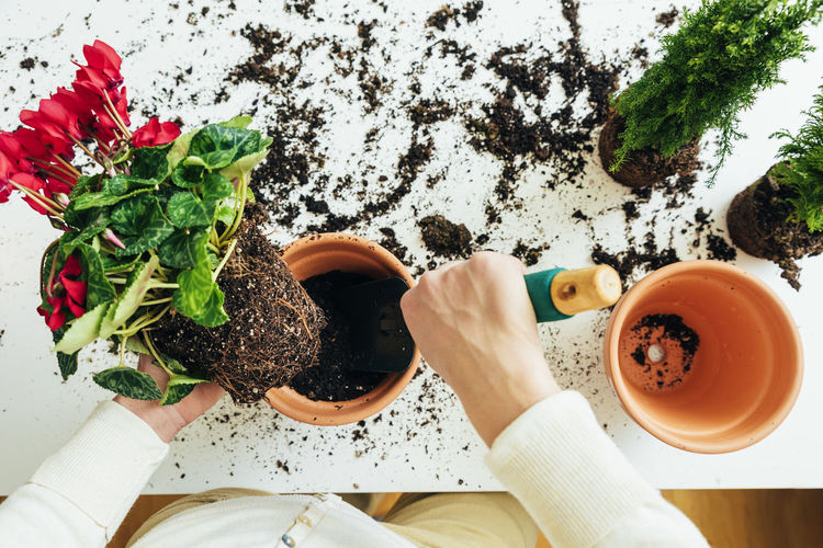 One Person Human Hand Hand Plant Food And Drink Holding Real People Human Body Part Lifestyles Food Nature Freshness Adult Table Directly Above Growth Women Wellbeing Personal Perspective Gardening Finger Home Interior Copy Space Flowerpot People Young Adult Lifestyle Seeds Bio Eco Earth