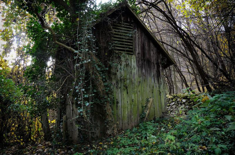 Austria ❤ Holz Hütte Niederösterreich Verlassene Orte Forest Nature No People Outdoors Scenics Tree Verlassen Wald WoodLand Österreich ♥️