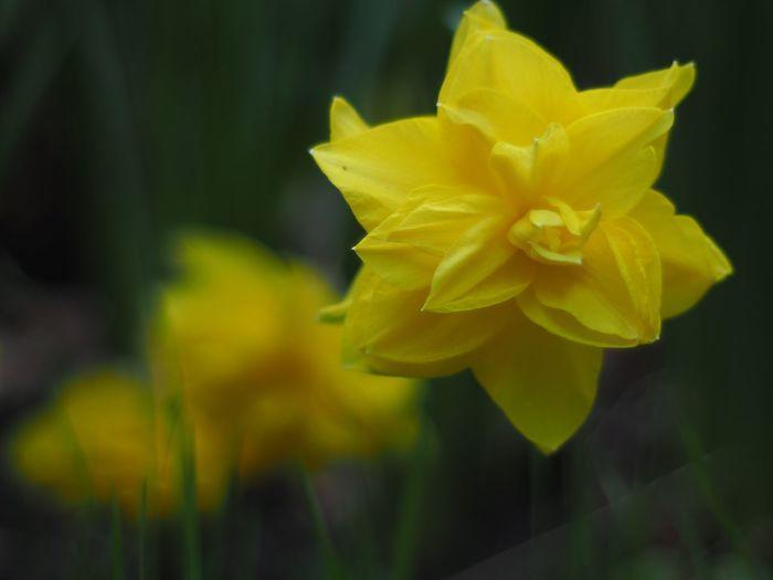 Yellow Yellow Flower Yellow Flowers Yellowflower Yellow And Green Flower Flowers Flowers,Plants & Garden Flowers, Nature And Beauty Flowerlovers Flower Photography Flowers :)