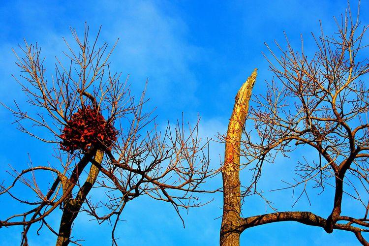Nature Photography EyeEm Nature Lover For The Love Of Trees ~ Tree Bark TreePorn Naked Trees Lookingup Park Life Birds Nest