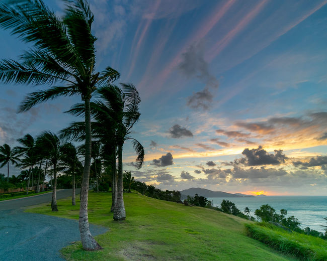 Scenic view of palm trees against sky during sunset