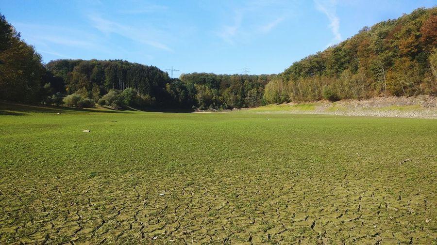 Trockenheit Flusslandschaft Flussbett Dystopic Dystopisch Flasche Bier Vertrocknet Klimawandel Hitze Tree Agriculture Sky Grass Green Color