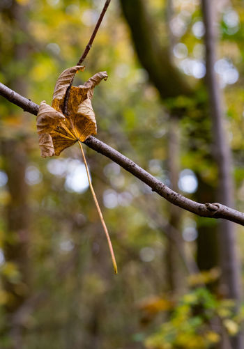 Trapped Autumn Leaves Branch Close-up Focus On Foreground Leaf Leaves Nature Selective Focus