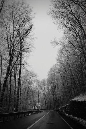 Road Winter Trees