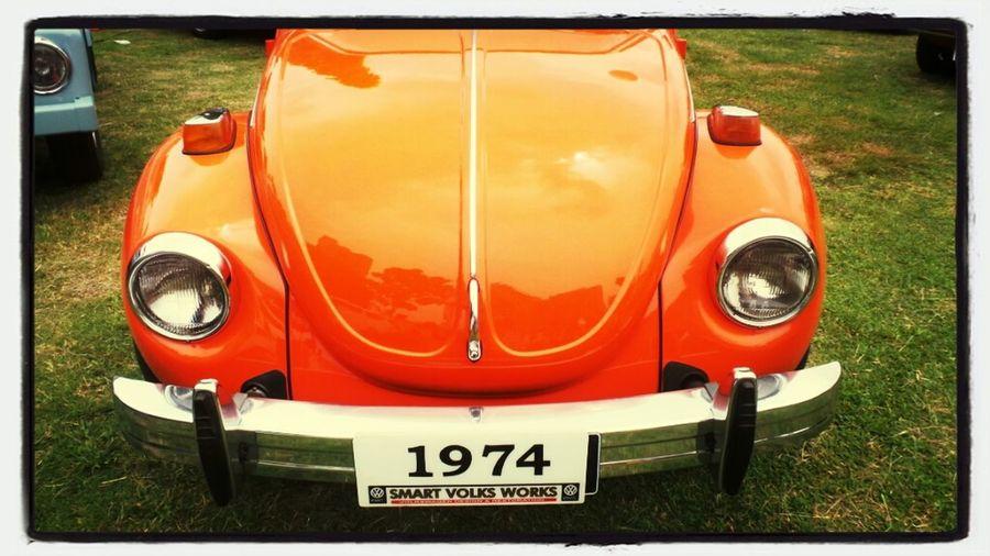 #beetle
