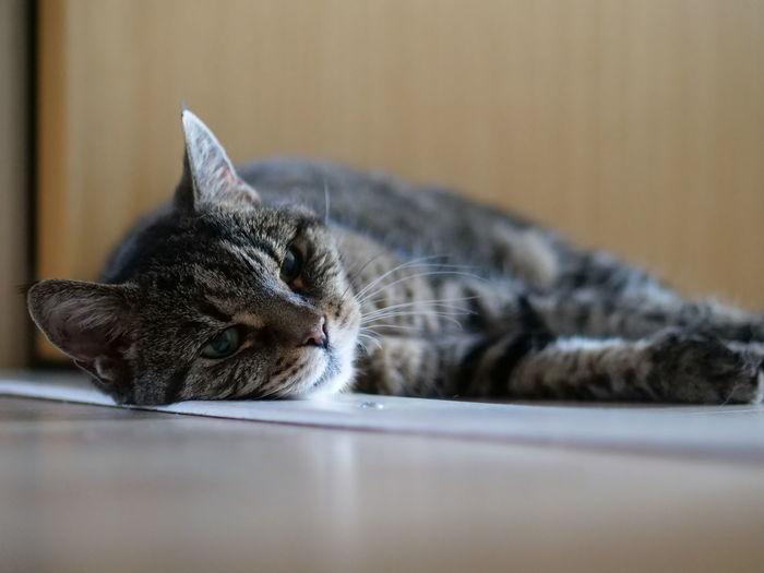 Close-up of a cat sleeping