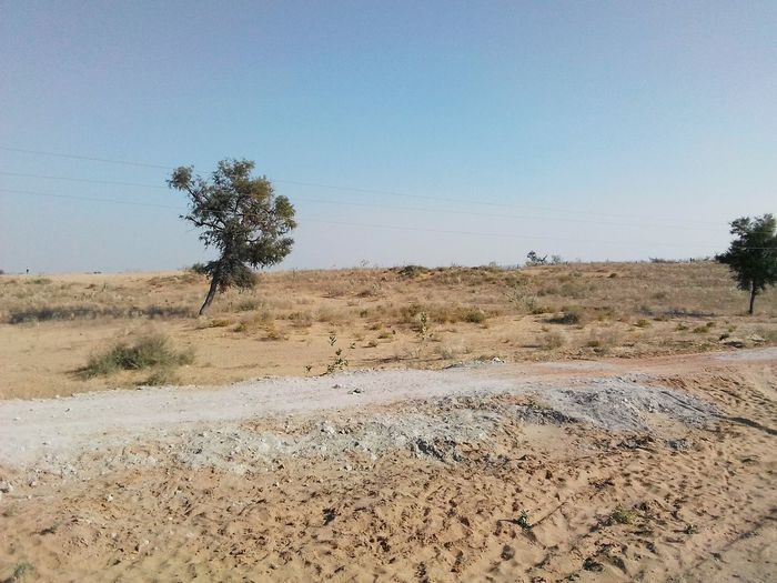 Desert landscape Rajasthan India Landscape_photography Desert Landscape Colourful Rajasthan Trees Desrt Scenes Sand Desert Nature Tree Day Arid Climate Outdoors Clear Sky Sand Dune Beauty In Nature Landscape No People Sky