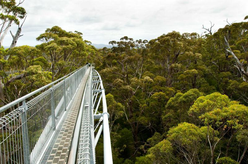 Tree Top Walk - Walpole - Australia Australia Tree Top Walk Forest Karri Trees Tree Walpole