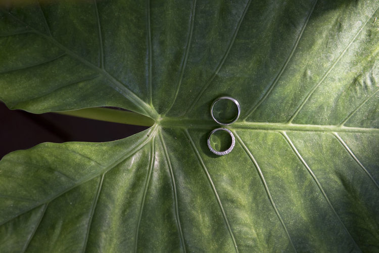 Directly Above Shot Of Wedding Rings On Leaf