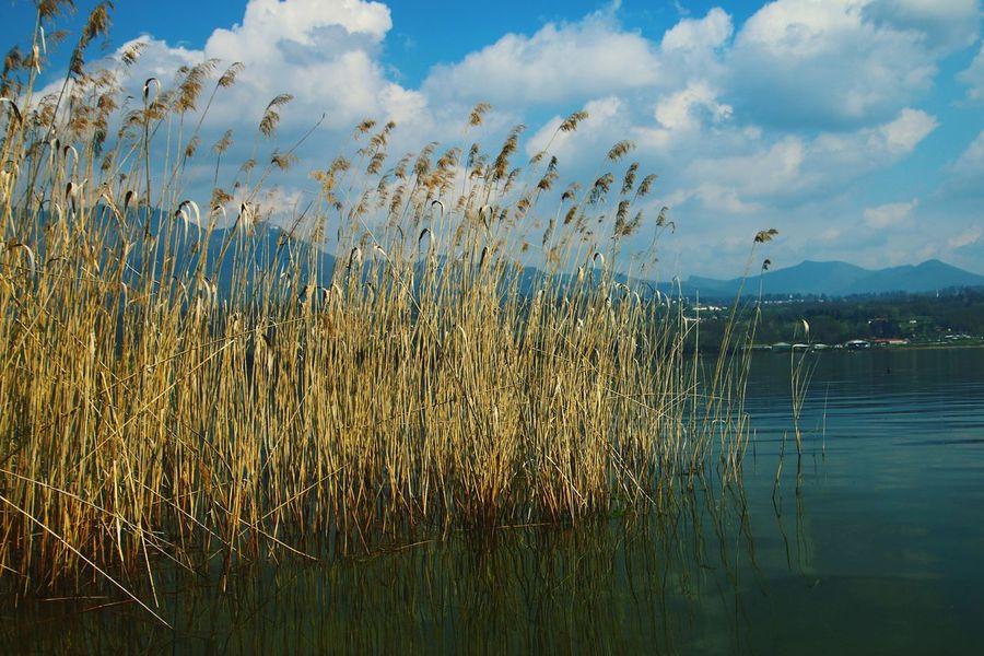 Relaxing Enjoying Life EyeEm Best Shots Eye4photography  Lake Lake View Landscape_Collection Landscape EyeEm Nature Lover EyeEm Landscape