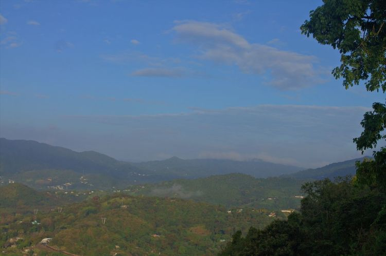 Mountain Tree Forest Nature Mountain Range Scenics Less Edit Juxt Photography