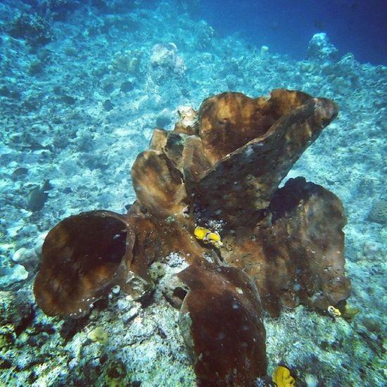Underwater at Bunaken Island..Wonderful!! Travelingram Backpackermanado Couchsurfing Manado couchsurfingmanado Indonesia