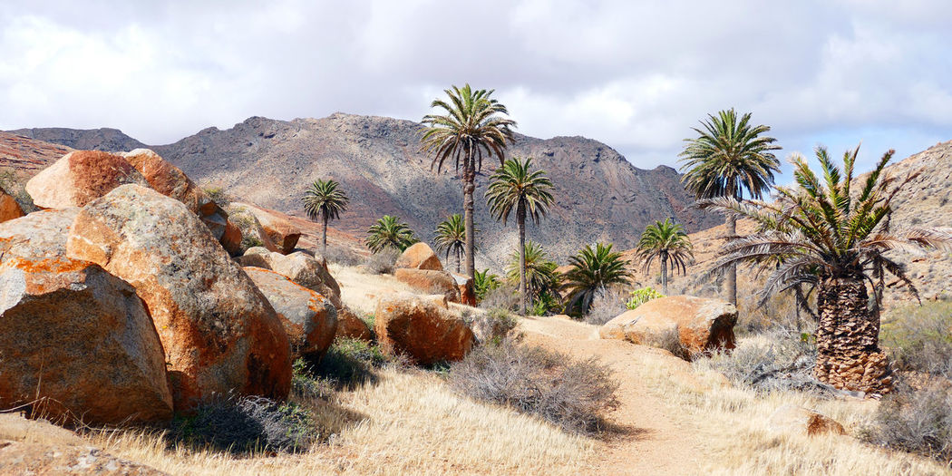 The Palm Canyon Canary Islands Fuerteventura Arid Climate Beauty In Nature Landscape Nature Palm Canyon Palm Tree Rock Rock - Object Rock Formation Scenics - Nature Tranquil Scene