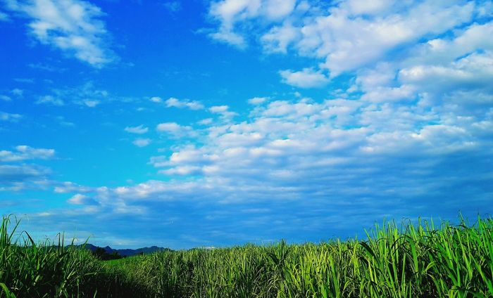 sky Green Color Plant Mountain Cloud - Sky Sky Beauty In Nature ❤️❤️ Thailand🇹🇭 2018 Day Rural Scene Summer Road Tripping The Portraitist - 2018 EyeEm Awards The Photojournalist - 2018 EyeEm Awards The Still Life Photographer - 2018 EyeEm Awards 10 The Troublemakers The Great Outdoors - 2018 EyeEm Awards The Traveler - 2018 EyeEm Awards The Creative - 2018 EyeEm Awards The Architect - 2018 EyeEm Awards The Fashion Photographer - 2018 EyeEm Awards The Street Photographer - 2018 EyeEm Awards Love Is Love EyeEmNewHere