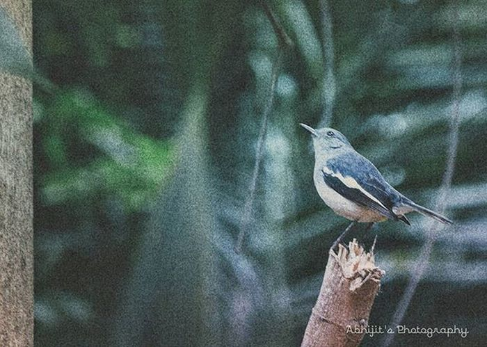 Not sure about the bird currently trying to find out :P Bird Nikon Picoftheday Photooftheday Color Forest Shallow Birdy Green Nikon_photography Insta_mazing Instagram Pixlr Vscocam Indiapictures Storiesofindia Happiness Instapic Instashot Bengal