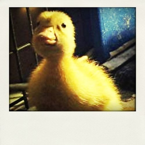 Lazza mums little duck :)