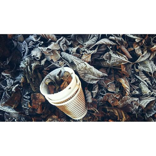 Coffee Cup And Frosty Leaves. Winter Coffee Dead Leaves On The Ground Outdoors Nature Human Intervention