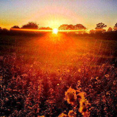 Sunset in Northamptonshire Sunset Sun Northampton Northants Northamptonshire Weather Summer Spring