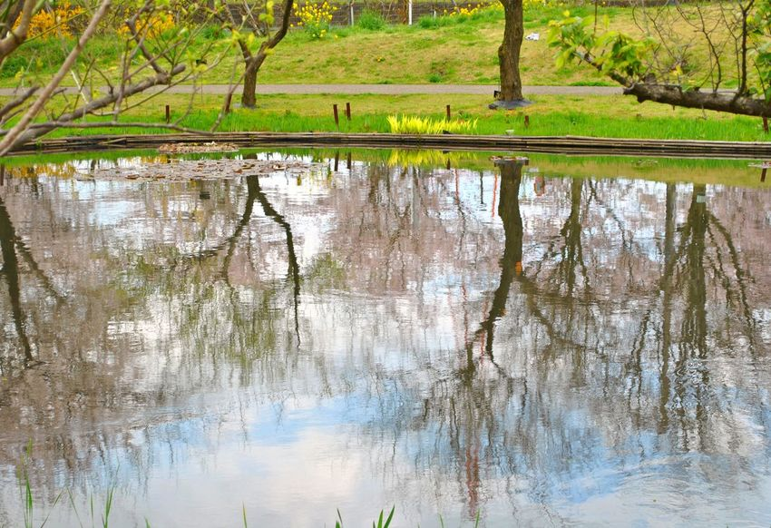 Beauty In Nature Day Grass Growth Japan Lake Nature No People Outdoors Reflection Scenics Spring Springtime Tranquil Scene Tranquility Tree Water The Week On EyeEm Postcode Postcards