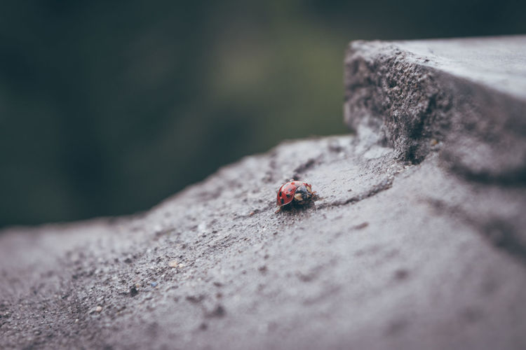 Animal Themes Animal Wildlife Animals In The Wild Ant Close-up Colony Day Insect Nature No People Outdoors Spotted