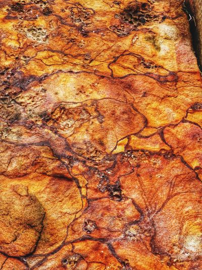 Ancient Sydney Sandstone Sydney Harbour Foreshore Barrangaroo,Sydney Orange Color Rock Formation Rocks And Water Nature Photography Close-up Beauty In Nature No People Natural Condition Nature Geology Sydney Harbour, Australia Earth Colours Rock Close-up