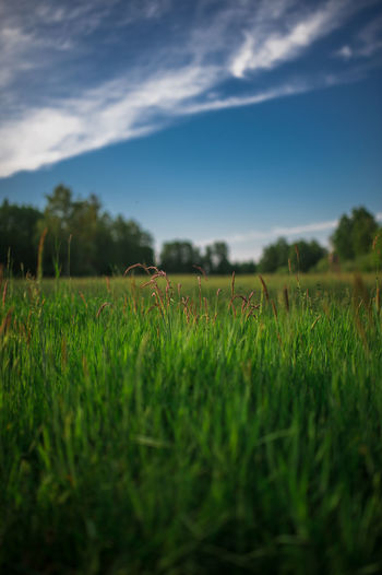 Surface level of grassy field against sky