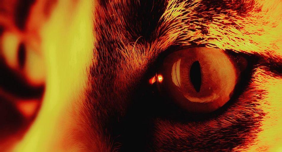 Smolder Sunset Orange Red Leica Lens P20 Pro Huawei Look Pet Animal Abstract Kitten Cat Close-up Eye Eyesight Iris - Eye