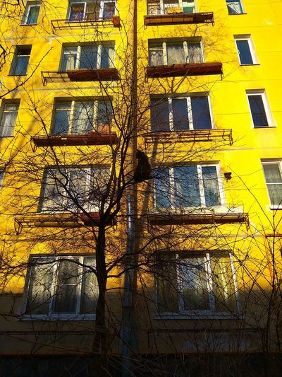Low angle view of yellow tree against building