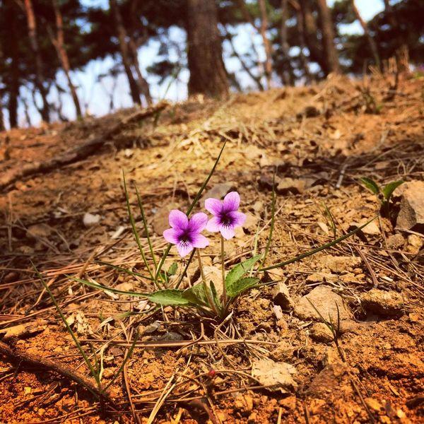 Flower Spring Park Gangnam
