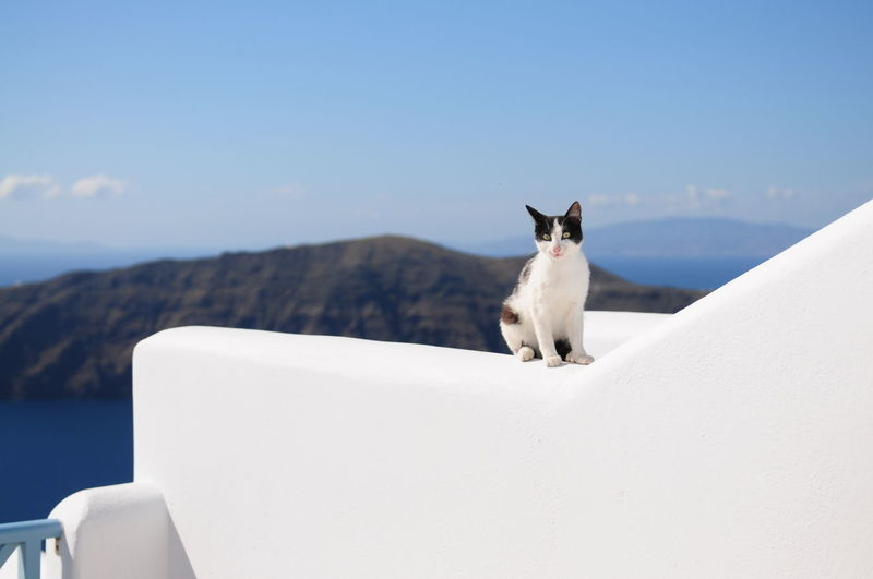 Cat sitting on whitewashed retaining wall against sky at santorini