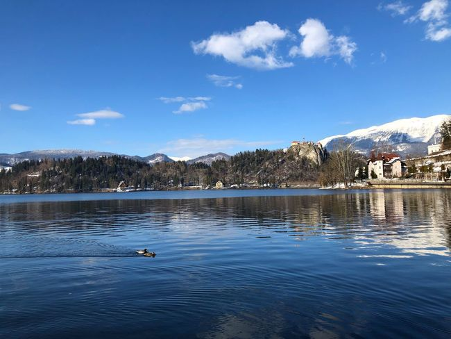 Slovenian Alps Bled Bird Animals In The Wild Animal Themes Water Lake Nature Beauty In Nature