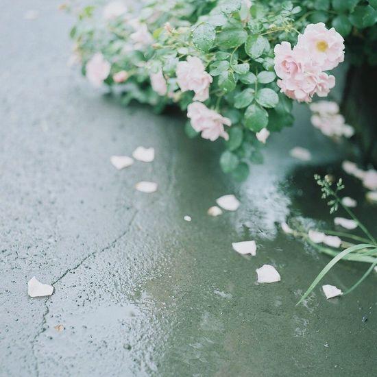 Filmphotography Japan Eyemphotography 120 Film Flower Photography Film