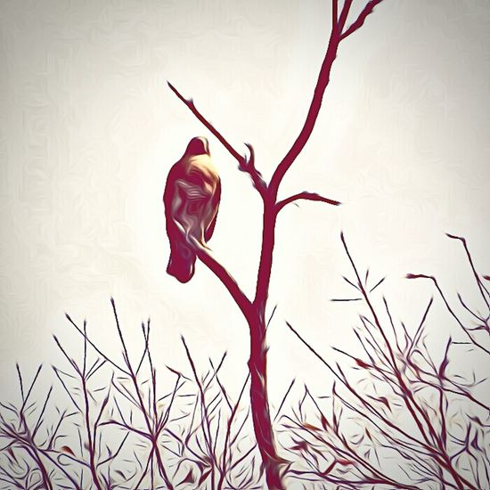 Hawk in a tree paint edit Hawk Hawk In Tree Paint Paint Edit Taking Photos Showcase: February Wildlife Photography Wildlife & Nature Bird Of Prey