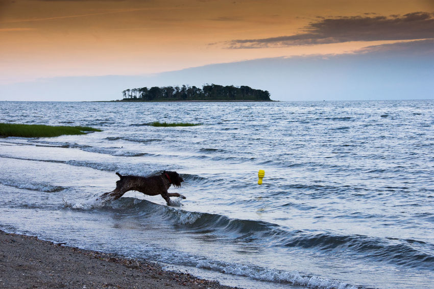 Animal Themes Beach Beauty In Nature Day Dog Domestic Animals Full Length Horizon Over Water Mammal Nature No People One Animal Outdoors Scenics Sea Sky Sunset Water Wave