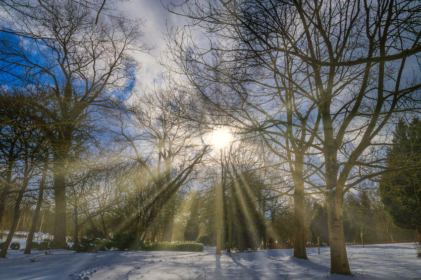 Bare Tree Beauty In Nature Cold Temperature Nature Outdoors Sky Snow Sun Sunlight Tranquil Scene Tranquility Tree Winter