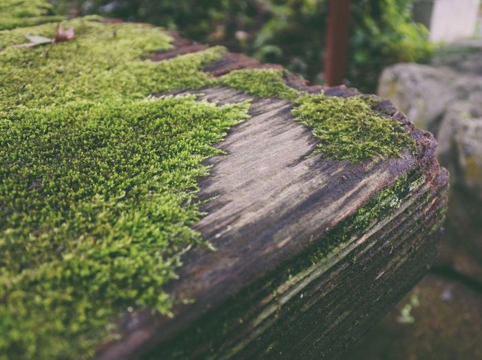 Selective Focus No People Nature Growth Close-up Green Color Outdoors Day Grass Tree Stump Tree Tree Ring Moss Nikon Nikonphotography VSCO Vscocam Vscogood Japan Photography Japan Relaxing Zen Beauty In Nature Calm Tranquility The Week On EyeEm