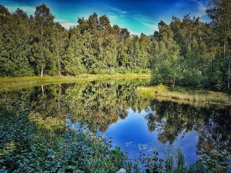Enjoying Life Sweden Eyeemoninstagram Halland Sweden-landscape Showcase August Landscapes_captures Best Pic EyeEmBestPics Into The Woods Nature_collection Nature Photography Our Best Pics Ugglarp Eyeem On Instagram Nature On Your Doorstep Nature_perfection Naturephotography