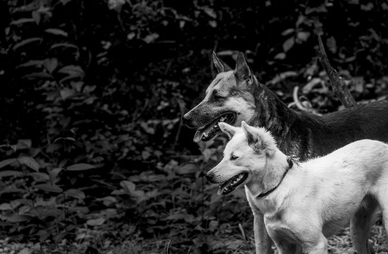 Side view of two dogs in woodland