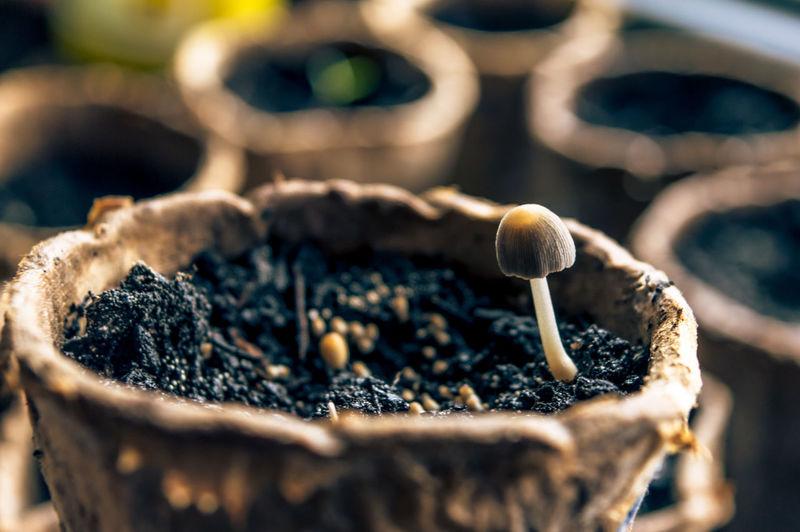 Close-Up Of Mushroom Growing In Pot