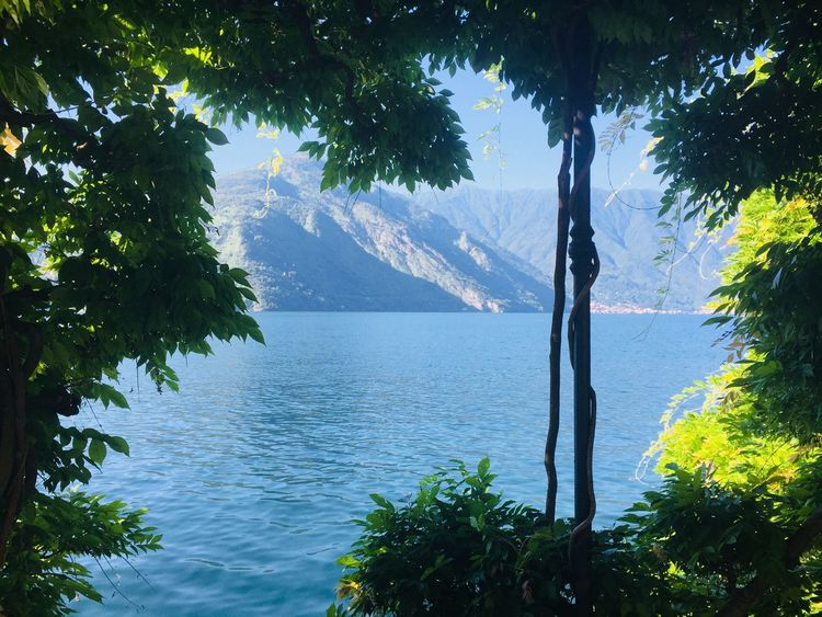 Beautiful lake como Tree Plant Water Beauty In Nature Nature Growth Scenics - Nature