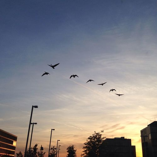 Perfect Moment Birds Sky Sunset Sun Sunshine Sunset_collection Flying Skyporn Soaking Up The Sun