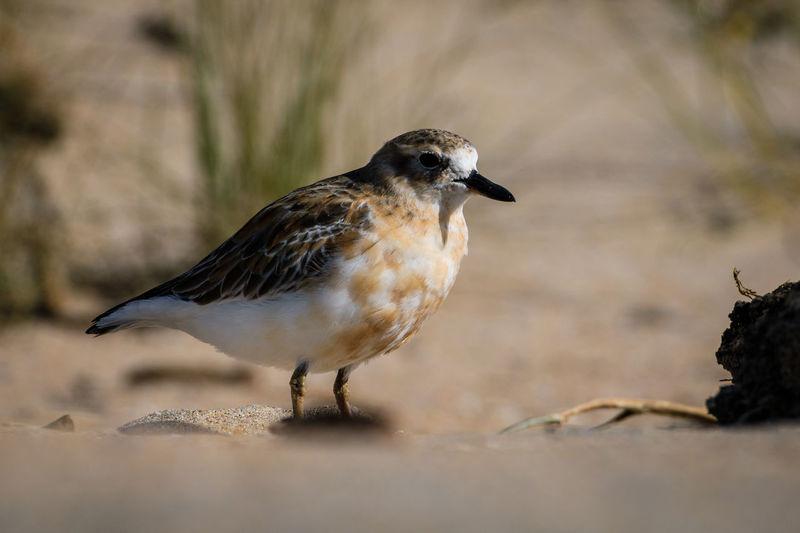 Close-up of bird perching on land