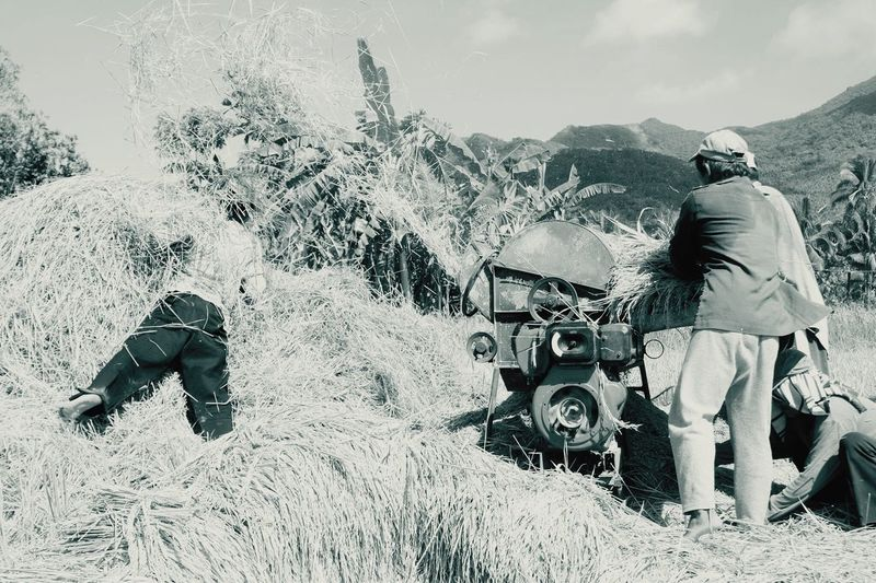 Harvest Time Hays Palay Tresher Manual Worker Itchy Blackandwhite Mountain Labo Camarines Norte Philippines