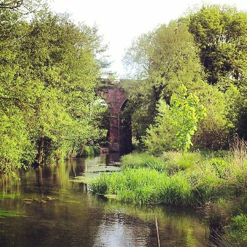 Bartonsmill Pub Countrypub Countrypubs countrypubbing trees railwaybridge railwaybridges viaduct water riverloddon