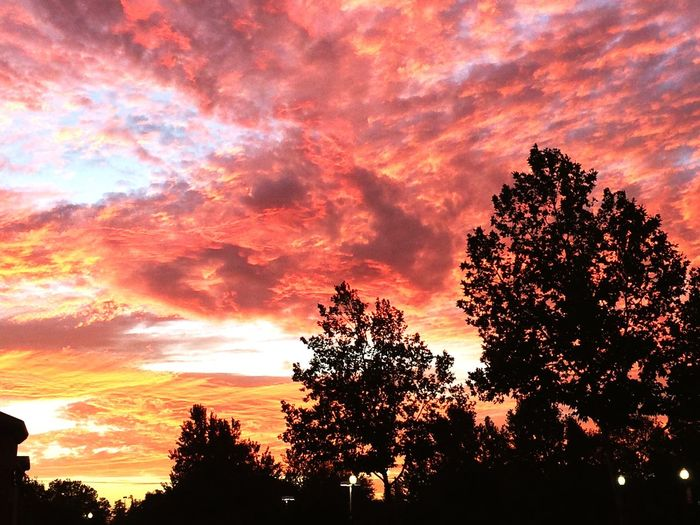 Sunset Tree Beauty In Nature Nature Sky Orange Color Silhouette Scenics No People Idyllic Dramatic Sky Outdoors Cloud - Sky Low Angle View Growth Treetop Day Awesome_shots Best Sunrises And Sunsets
