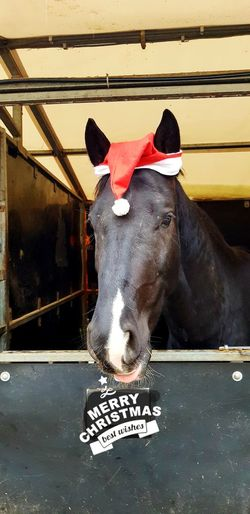 a horsey christmas Text Close-up Livestock Stable Horse
