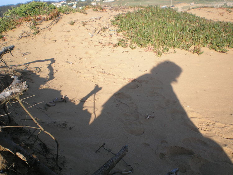 Isla Negra Beach Day Focus On Shadow Grass High Angle View Nature Neruda No People Outdoors Sand Shadow Sunlight Sunshine Lost In The Landscape