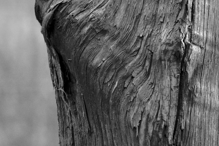 Barking Up The Wrong Tree Tree Trunk Textured  Trunk Tree Wood - Material Close-up Pattern Rough Weathered Backgrounds Natural Pattern Knotted Wood Focus On Foreground Old Bark Wood Wood Grain Blackandwhite Black And White