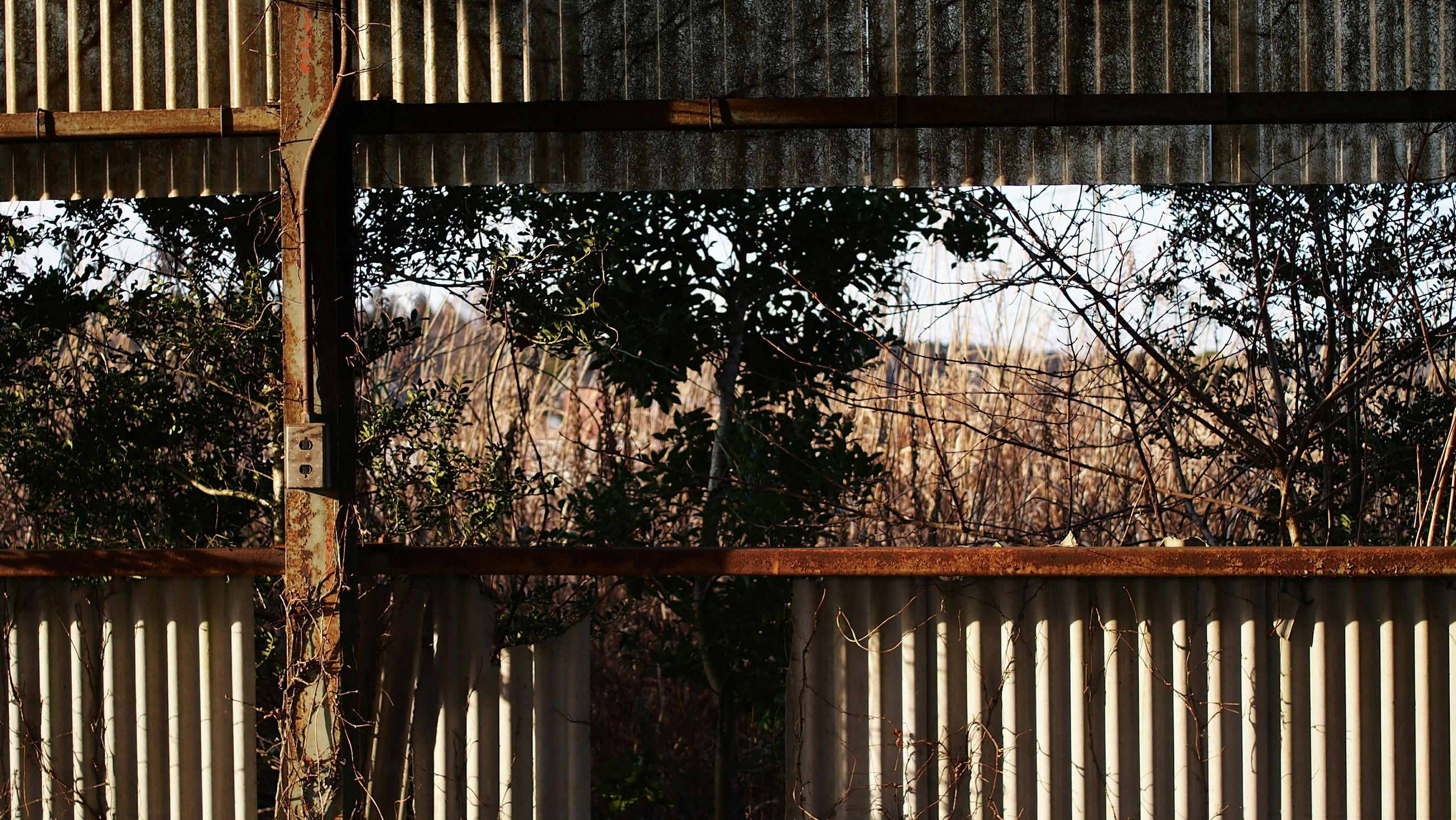 architecture, fence, built structure, building exterior, window, tree, protection, railing, metal, safety, house, security, closed, gate, growth, day, no people, outdoors, chainlink fence, plant