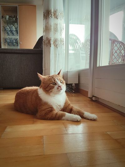 😼 Pets No People Animal Themes Domestic Animals Window Kater Kitty Kitten Animal Beautiful Housecat EyeEmNewHere